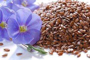 лен и его семена